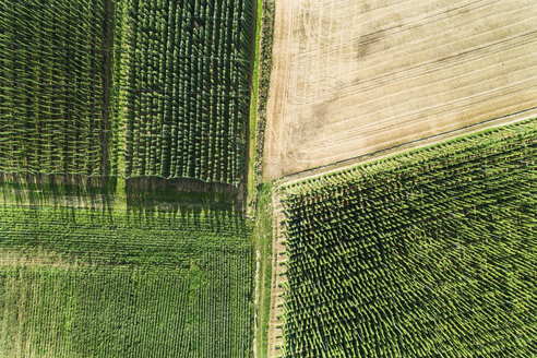 Germany, Bavaria, hop fields, aerial view - MAEF12408