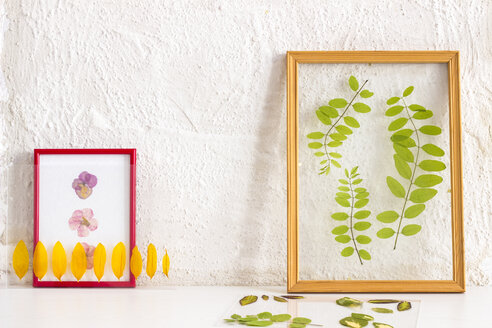 Pressed and framed petals and leaves - CMF00718