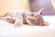 Tabby cat relaxing on bed - SIPF01687