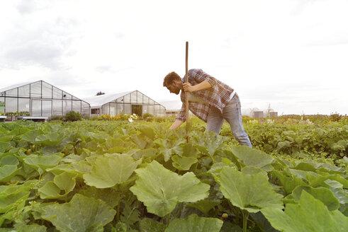 Farmer working in vegetable field - LYF00786