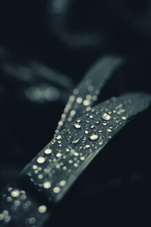 Leaf with waterdrops, close-up - DWIF00869
