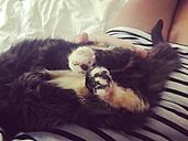 Cat in lap - LMF00731