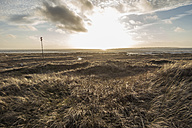 Germany, Lower Saxony, East Frisia, Langeoog, dune landscape at sunset - JATF00972