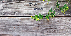 just dream motto, wooden wall, plants, Berlin, Germany - NGF00396