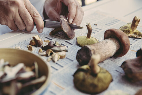 Man's hand cutting bay bolete - MFF03949