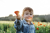 Boy in a poppy field in spring holding poppy - JRFF01441