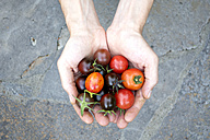 Man's hands holding various organic tomatoes - NDF00686