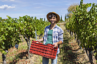 Portrait of smiling man holding box with  harvested grapes in vineyard - MGIF00119