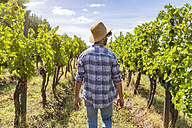 Man walking in vineyard - MGIF00122