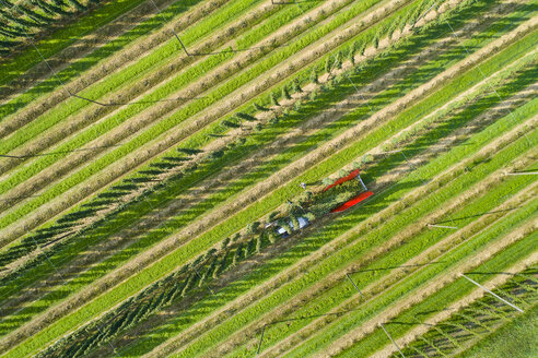 Germany, hop picking, aerial view - MAEF12412