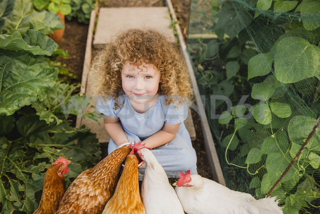 Portrait of little girl feeding chickens in allotment - NMSF00157