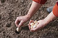 Close-up of woman planting garlic - HAWF00983