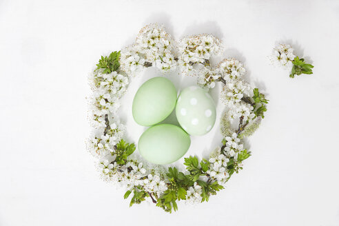 Hand dyed green Easter eggs in nest of cherry flowers and willow on white background - GWF05249
