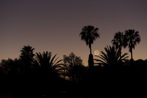 Namibia, Region Khomas, near Uhlenhorst, Astrophoto, setting New Moon crescent with palm trees in foreground - THGF00011