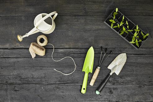 Gardening tools and seedlings on dark wood - PDF01399