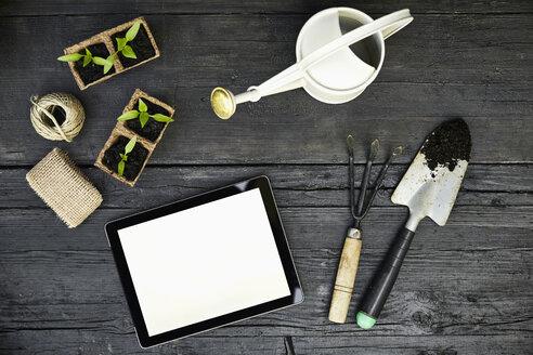 Gardening tools, seedlings and tablet on dark wood - PDF01402