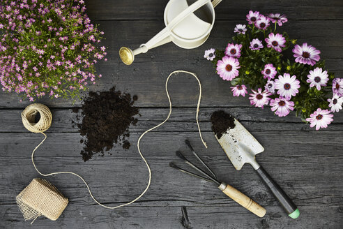Gardening tools and blooming plants on dark wood - PDF01405