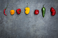 Row of various chili pods on grey background - LVF06318
