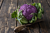 Purple cauliflower and old knife on wood - CSF28293