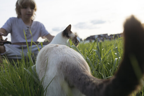 Cat and boy together on a meadow - KMKF00018