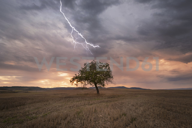 Lightning over lonely tree at scenic sunset - DHCF00159