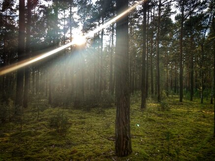 Sunbeam in forest - NGF00436