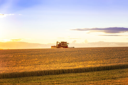 UK, Scotland, East Lothian, combine harvester in field of wheat at sunset - SMAF00838