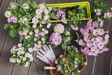 Various pink blooming potted plants on terrace - GWF05282