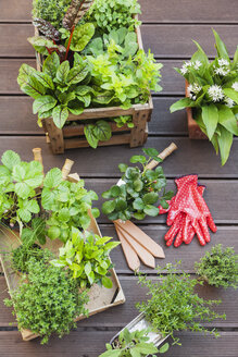 Various potted spice plants on terrace - GWF05285