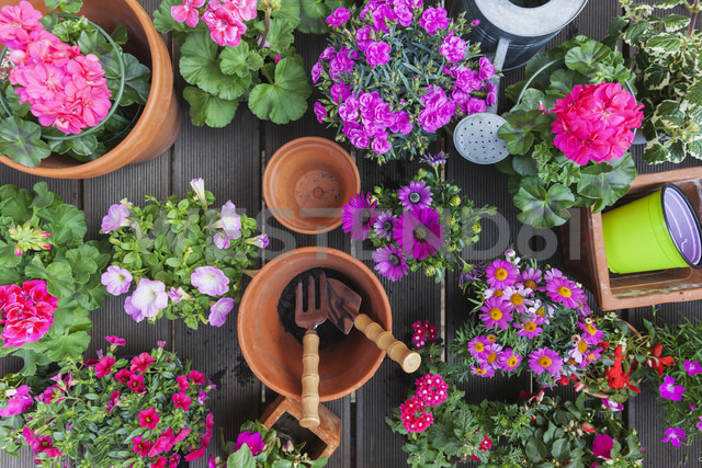 Various pink blooming potted plants on terrace - GWF05291 - Gaby Wojciech/Westend61