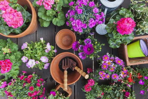 Various pink blooming potted plants on terrace - GWF05291