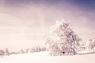 Germany, Baden-Wuerttemberg, Schliffkopf, winter landscape at Black forest - PUF00793
