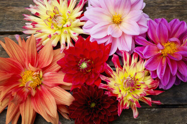 Various Dahlias - CSF28371