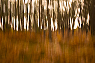 Abstract forest in autumn - FCF01287