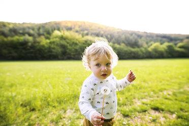 Cute little boy on meadow holding dandelion - HAPF02305
