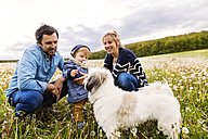 Cute little boy with parents and dog in dandelion field - HAPF02320