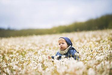 Cute little boy in meadow full of dandelions - HAPF02326