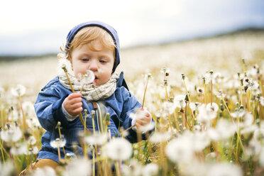 Cute little boy in meadow full of dandelions - HAPF02329