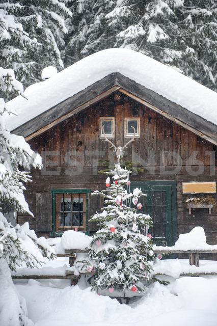 Austria, Altenmarkt-Zauchensee, Christmas tree at wooden house in snow - HHF05511 - Hans Huber/Westend61
