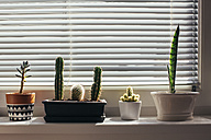 Little flower pots on windowsill - MOMF00274