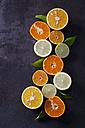 Halved lemons, limes, tangerines and oranges - CSF28475