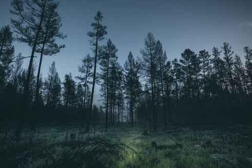 Forest at night - VPIF00254