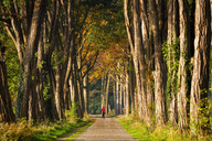 Germany, alley and cyclist in autumn - KLRF00539