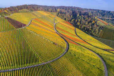 Germany, Stuttgart, aerial view of vineyards at Kappelberg in autumn - STSF01364