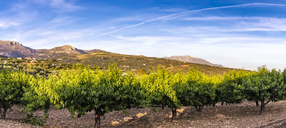 Spain, Mondron, view to peach trees - SMAF00847