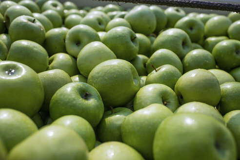 Assortment of green apples - ZEF14674