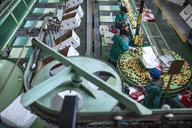 Women working in apple factory - ZEF14692