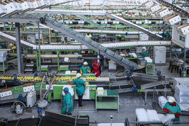 People working in apple factory - ZEF14698