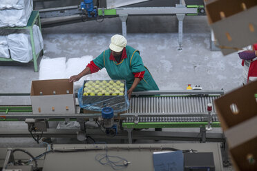 Woman factory packing apples in cardboard box - ZEF14701