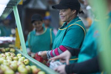 Women working in apple factory - ZEF14710